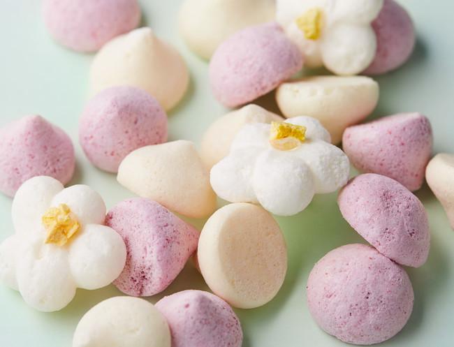 【期間限定】爽やかなシュークリームや夏仕様のメレンゲがスタート!